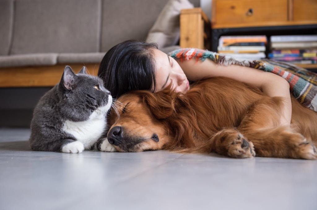 zwierzęta - adopcje - Schronisko dla zwierząt Miluszków Piła